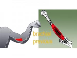brachial previous